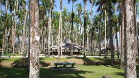 Palm Gardens. In Paramaribo Suriname Royalty Free Stock Photo