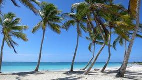 Palm gevoerd strand in Punta Cana, Dominicaanse Republiek Royalty-vrije Stock Foto's