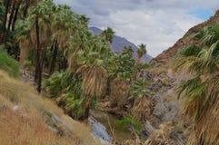 Palm Gevoerde Canion en Oase royalty-vrije stock afbeeldingen
