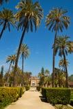 Palm-gevoerde promenade royalty-vrije stock afbeeldingen