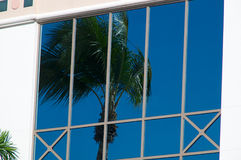 Palm in glas wordt weerspiegeld dat Royalty-vrije Stock Foto