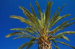 Palm. Green palm leafs on sky Royalty Free Stock Image