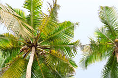 Palm green leaves over tropical coconut wood on exotic island. Stock Images