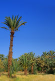 Palm grove Royalty Free Stock Images