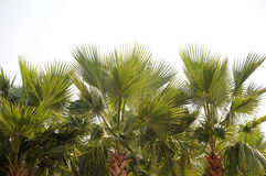 Palm grove Royalty Free Stock Photography