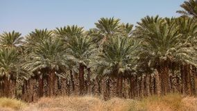 Palm grove Royalty Free Stock Photos