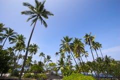 Palm grove Royalty Free Stock Photos
