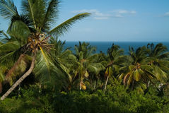 Palm Grove against the blue sky and the sea Stock Photo