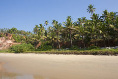 Palm grove on the beach. Royalty Free Stock Image