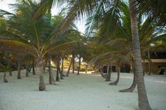 Palm grove on the exotic tropical beach Stock Photography