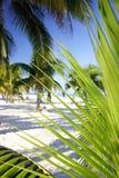 Palm Grove Foliage. Palm tree foliage on tropical beach stock photography