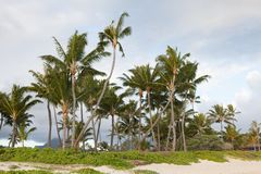 Palm grove on a beach at a ideal tropical location. A palm grove grows on the sandy beach of a tropical island Stock Images
