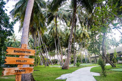Palm grove, The Maldives island. The Maldives in October, indian ocean, Ari Atoll Royalty Free Stock Images
