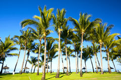 Palm grove Stock Photos
