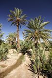 Palm Grove Oasis Royalty Free Stock Image