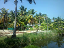 Palm grove on outskirts of Indian village. Pleasing to eye garden Stock Images