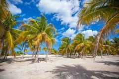 Palm grove on the sandy tropical beach at exotic Stock Photos