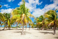 Palm grove on the sandy tropical beach at exotic Royalty Free Stock Photo