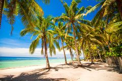 Palm grove on the sandy tropical beach at exotic Royalty Free Stock Image
