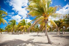 Palm grove on the sandy tropical beach Stock Photo