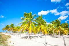 Palm grove on the sandy tropical beach Royalty Free Stock Images
