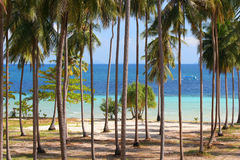 Palm Grove Sea View Stock Photos