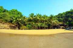 Palm grove on a small beach with yellow sand. Royalty Free Stock Photo