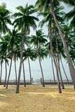 Palm grove on a tropical beach Stock Photography