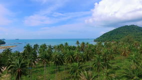 Palm Grove on Tropical Samui Island in Thailand, Aerial View. Palm Grove on Tropical Samui Island, Aerial View stock video footage
