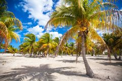Palm grove on white sandy tropical beach at exotic Royalty Free Stock Images