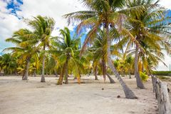 Palm grove on white sandy tropical beach at exotic Stock Images