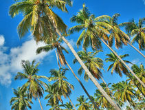 A Palm grove Royalty Free Stock Image