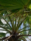 Palm growing to the sky royalty free stock photos