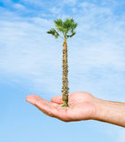 A  palm in hand Royalty Free Stock Image