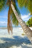 Palm hanging over beach Royalty Free Stock Photo