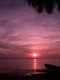 Palm Harbor Sunset Royalty Free Stock Photo