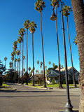Palm Heaven. A neighborhood with tall palm trees on every street. Located in San Jose close to downtown. An equally tall looking lamp post and a perfect blue sky Stock Photos