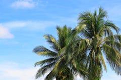 Palm, hemel en wolk Royalty-vrije Stock Foto