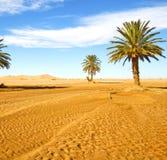 palm in het duin van Marokko de Sahara Afrika van woestijnoasi Royalty-vrije Stock Afbeeldingen