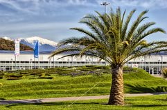 Palm in het Olympische Park Stock Fotografie