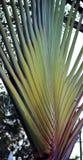 Palm in het park Royalty-vrije Stock Foto's