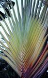 Palm in het park Royalty-vrije Stock Afbeeldingen