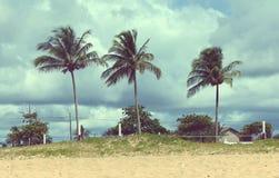 Palm in het strand Stock Afbeelding