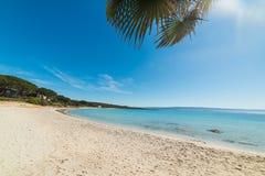 Palm in het strand van Le Bombarde stock fotografie