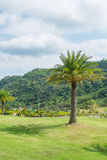 The palm on the hill. In thailand Stock Photo
