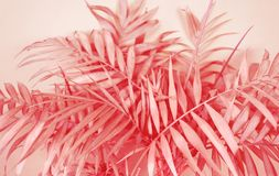 Palm home flower of coral color. Pink background stock photos