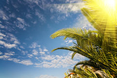 Palm and hotel on blue sky Stock Photo