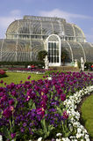 Palm house kew gardens London uk. Vertical royalty free stock photography