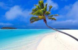 Palm II van het paradijs Stock Fotografie