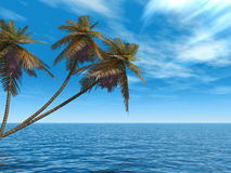 Palm_island Royalty Free Stock Images